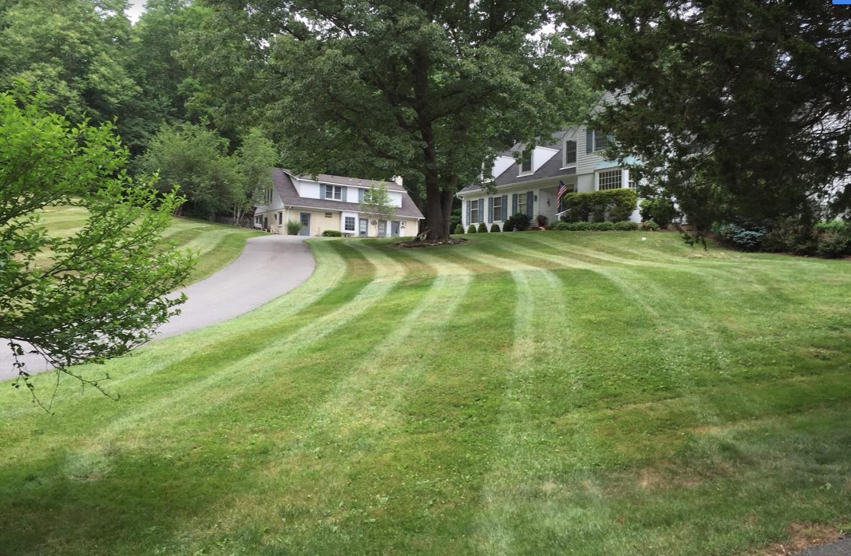 Lawn Care Picture8