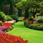 Red flower garden landscape